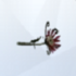 Flor de la Muerte LS4