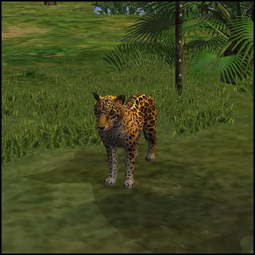 Sims  Cats And Dogs Wikia