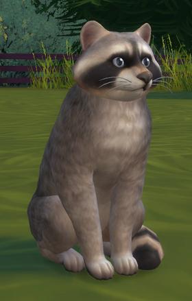 TS4 Raccoon