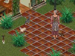 Kat-The Sims