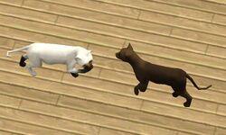 Gatos em The Sims 3 Pets