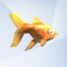 Peixe-dourado (TS4)
