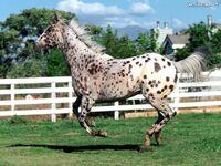 Cavalos-lindos-7221b6