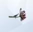 Flor da Morte (TS4)
