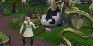 Carreira Jardineiro - Botânica
