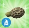 Cogumelo Morchella Falso