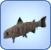 Peixe-Múmia