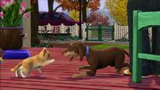 Sims-3-Pets-Cat-And-Dog 656x369
