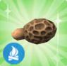 Cogumelo Morchella