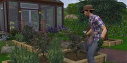 Carreira Jardineiro