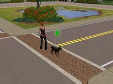 Sim andando com cachorro