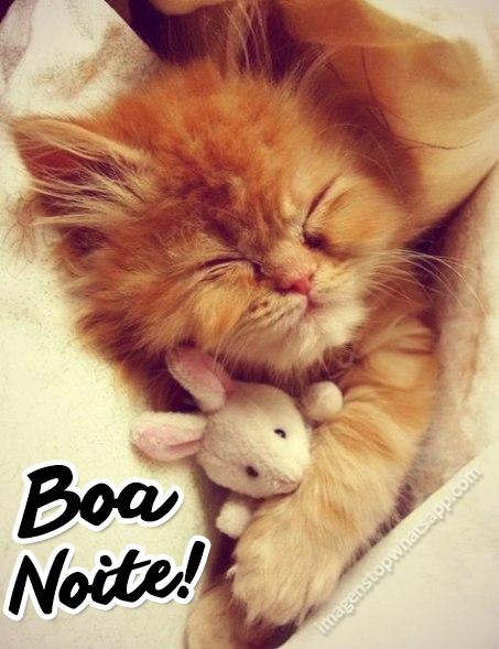 Imagens-para-whatsapp-Boa-noite-Gatinho