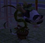 Planta-Vaca