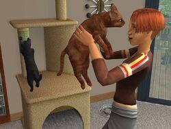 Gato (The Sims 2)