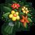 Tradição Dar Flores