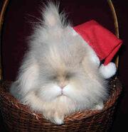 Emile's bunny