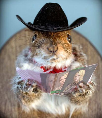 File:Squirrel georgee.jpg
