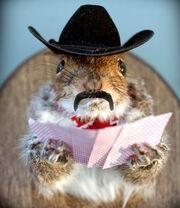 Squirrel georgedeeee