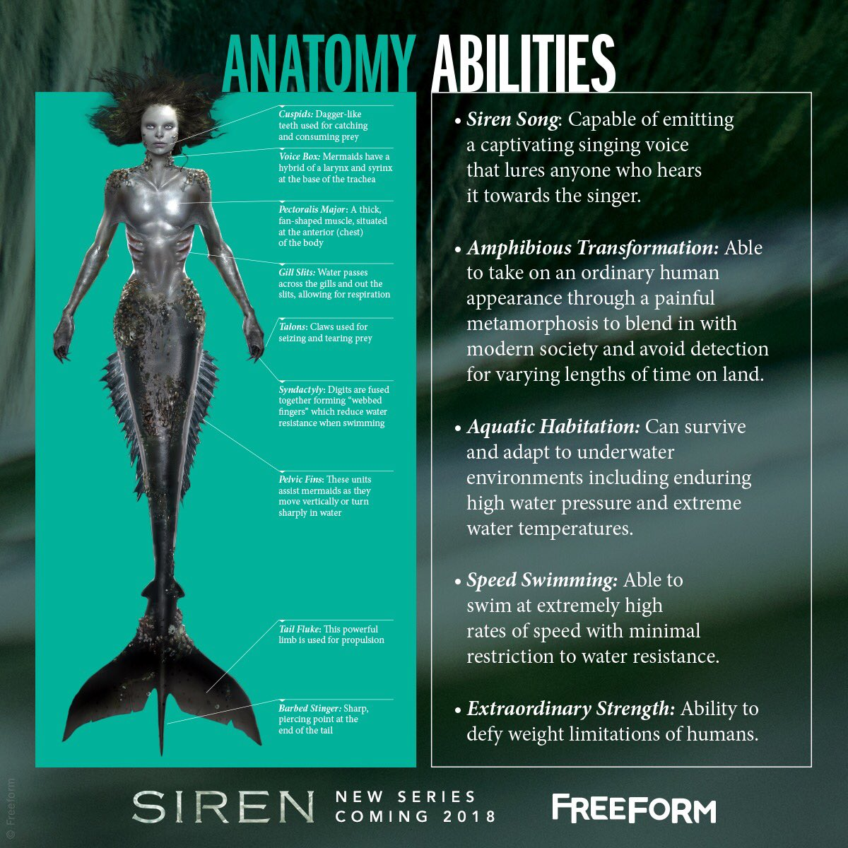 Datei:Freeform Official Mermaid Anatomy and Abilities Poster.jpg