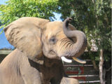 Tava's Elephant Show