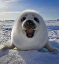10-ridiculously-cute-baby-seal-pup-photos3.jpg.pagespeed.ce.9nO2C2vhZDPrSzLVe GN