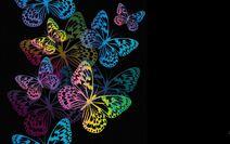 Butterfly-Live-Wallpaper-Good-D29