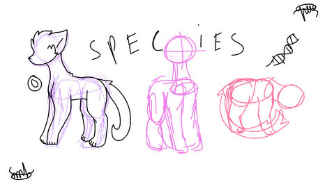 Species Category Cover