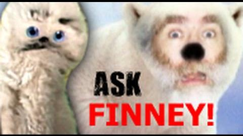 Ask Finney 1 - Old Man Polar Bear