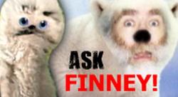 Askfinney1b