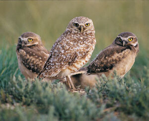 B OWL