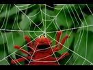 Sesame Street - Elmo's World Bugs Imagine Season 32