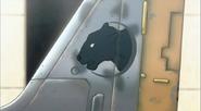 Black Cat on tail