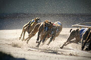 Dog-racing track stock photo