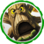 Series-2-stump-smash-icon
