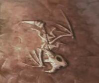 Skeleton Spyro Crypt