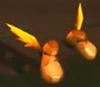 Zapatillas salvajes