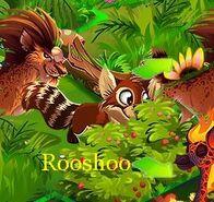 Rooshoo b