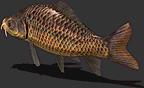 Fish-Carp