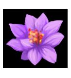 Violet lotus