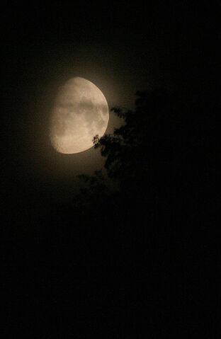 File:Nightmoon.jpg