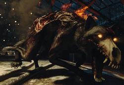 Hellhound BO3