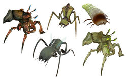 Antlions all
