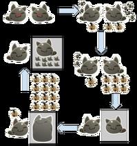 Tabby Reproduction