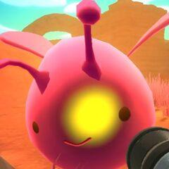A Pink/<a href=