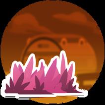 CoralGrassPatch-1-