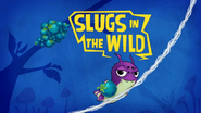 Slugs In The Wild