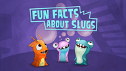 Fun Facts About Slugs