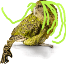 DRAKE THE KAKAPO FROM THE MAORI COOPER S ALLIANCE WHICH IS RUN BY ZANDER DEL COOPMECH BY THE WAY