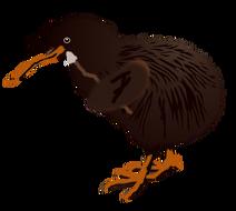 Buddy-kiwi