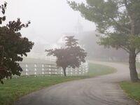 Horse Farm Lexington